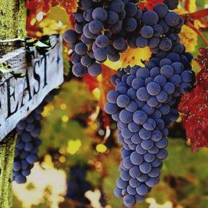 Wine Harvest Feast