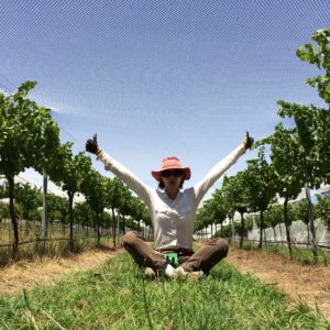 The Accidental Vigneron